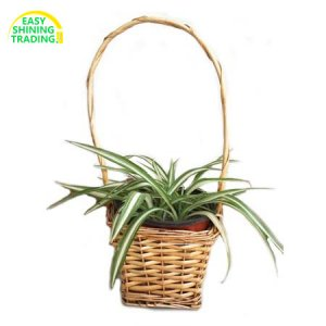 wicker plant baskets